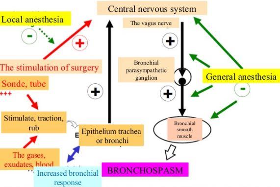 Bronchospasm Pathophysiology