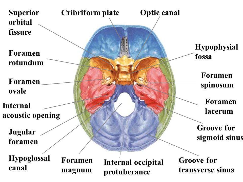 foramen spinosum