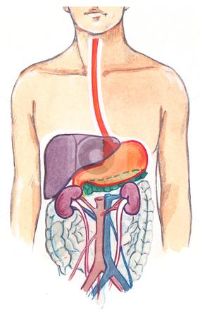 Hyperactive Bowel Sounds digestive system